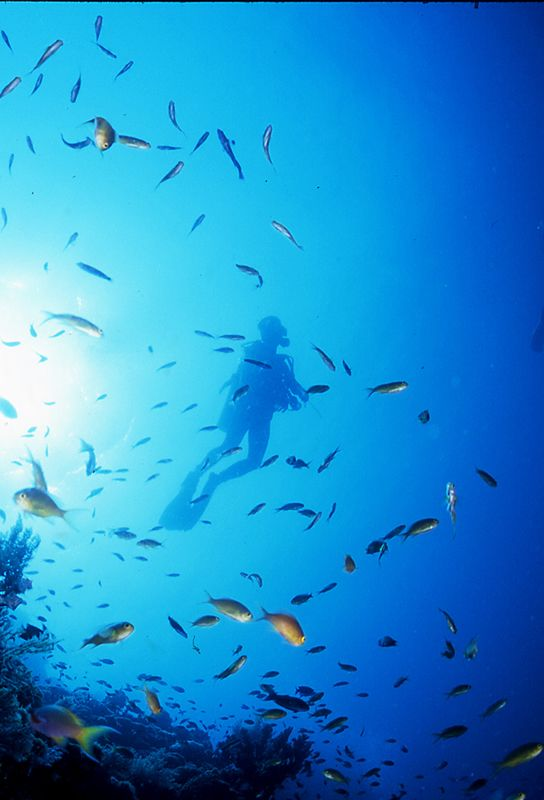 【H.I.S.】【Ceb island】セブ島でダイビング! #his_blue