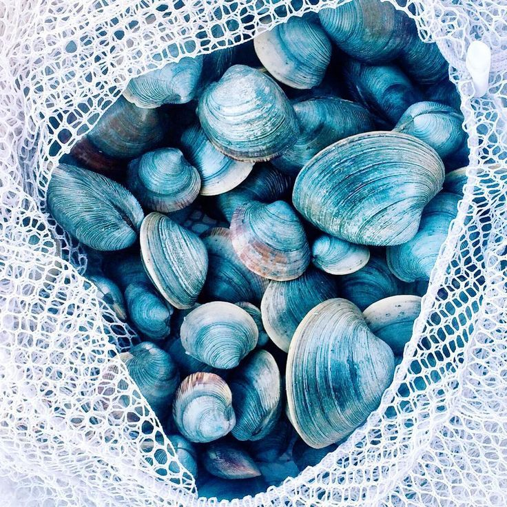 A salty bag of delicious bivalves. The colors and textures evoke so much happiness.