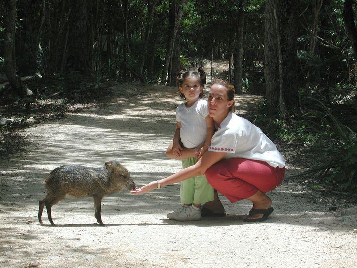 FAUNE À ACTUN-CHEN: LE SINGE-ARAIGNÉE! https://aktun-chen.com/fr/blog/animales-exoticos-los-monos-arana.html