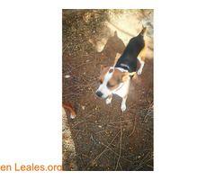 Ram  #Perdido #Encontrado #sebusca #extraviado #LealesOrg  Contacto y info: Pulsar la foto o: https://leales.org/perdidos-o-encontrados/perros-perdidos/ram_i2631 ℹ  Este perrito se escapó el 31 de diciembre por la noche en galdar se llama ram y tiene chip por favor si lo ves contacta con 675 090 880   Acerca de esta publicación:   Esta publicación NO ha sido creada por Leales.org y NO somos responsables de su contenido. Ha sido publicada gratuitamente por un usuario en la multiplataforma…