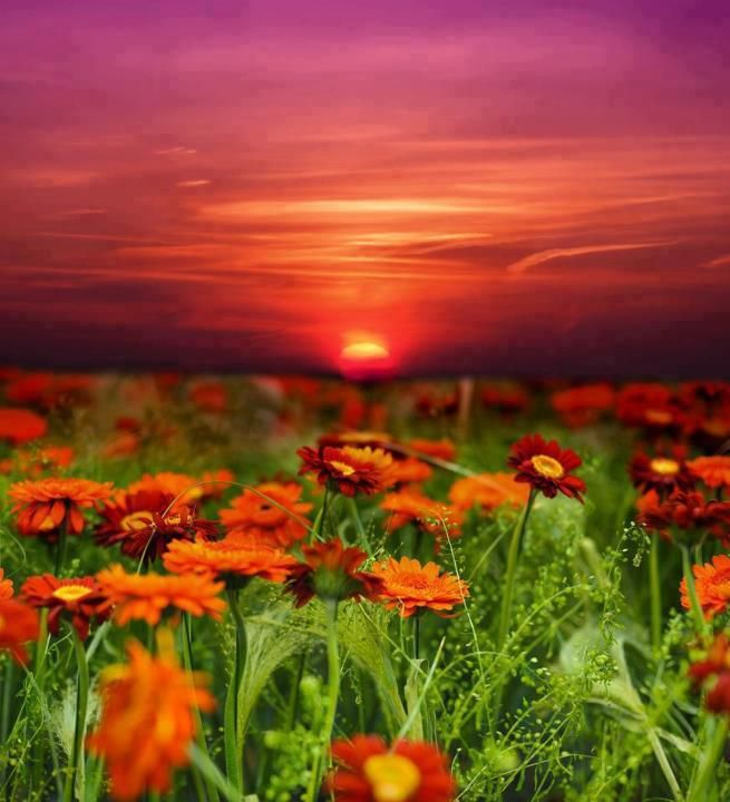 132 best images about Les plus belles FLEURS DU MONDE on Pinterest | Pumpkins, Belle and Planters