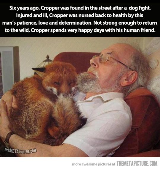 Happy fox and his human friend… it probably runs around going RINGDINGDINGDING