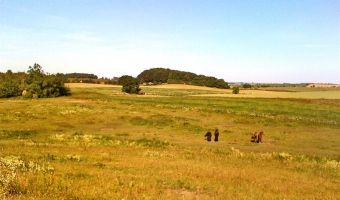 Horses grazing on farm meadow in summer.