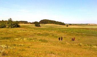 Horses grazing on farm meadow in summer.