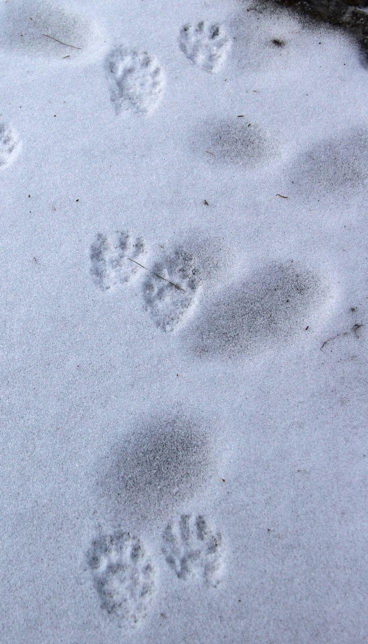89 best footprints images on pinterest footprints foot prints