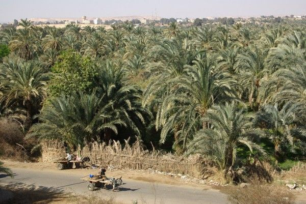 Bahariya Oasis...    Egypt Online Travel Agencies, Egypt Tours Packages, Egypt Cairo Holidays    www.blueskygroup.net