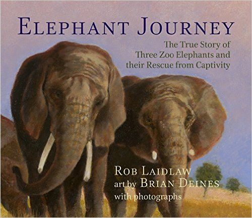 (Pajama Press) In 2013, people across North America were riveted by the story of Toka, Thika, and Iringa, the last three elephants at the zoo in Toronto, Ontario. Lonely for a larger herd, sick from the cold climate, and weak from standing for long days in a too-small concrete enclosure, the elephants desperately needed a change.