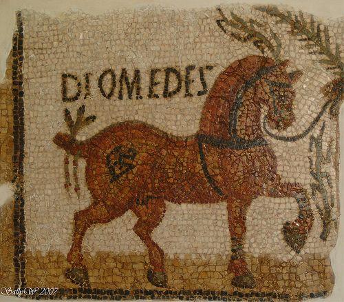 roman mosaic horse bardo museum tunisia