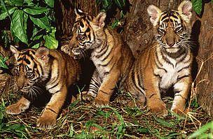 Stillehavsstater vil bekjempe ulovlig handel med truede dyrearter
