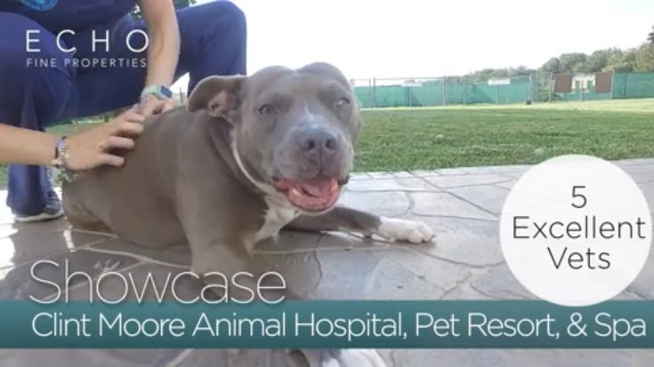 """#EchoShowcase...looking for the perfect place to bring your four-legged friend for a relaxing spa day & a trip to the """"doggie pool""""...  Agent Toby Feller introduces us to the Clint Moore Animal Hospital, Pet Resort, & Spa in Boca Raton...  A family-run business, over 30 years in business, 5 experienced vets to take care of your sick animal, located on 5 acres with a large doggie pool for your four-legged friend to enjoy....#EchoFineProperties #NextWaveInRealEstate #ClintMooreAnimalHospital"""