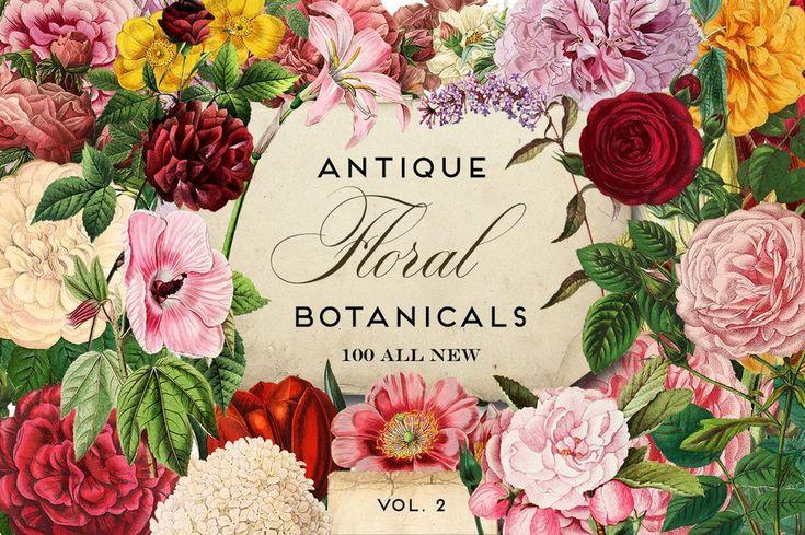 Antique Botanical Floral Graphics Mega Pack 2 – Avalon Rose Design