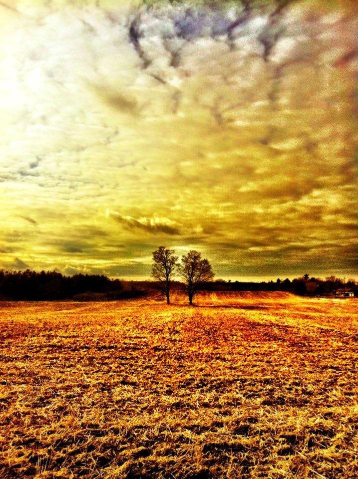 Love trees=)