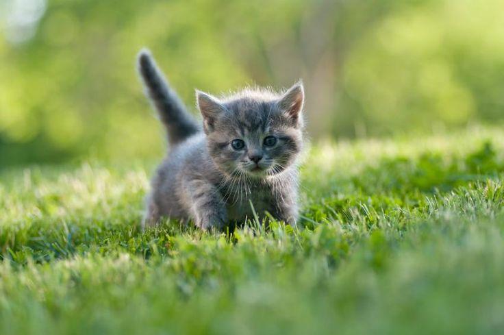 Names for Gray Kittens [Slideshow]