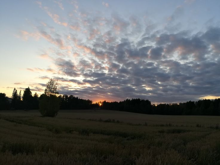 Sun set field