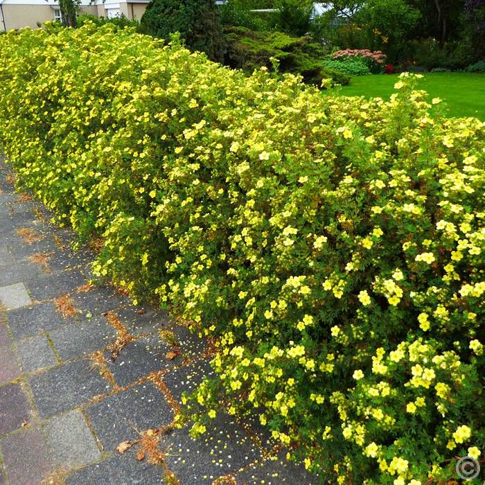 22 best images about easy care plants for a sloped terrace for Easy maintenance bushes