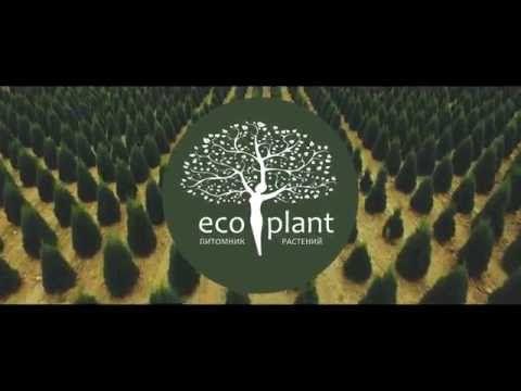 Продажа деревьев крупномеров для посадки из питомника - Ель голубай, Сосна и другие