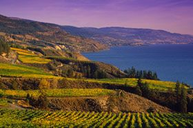 Looking for the perfect wine tour in the Okanagan? Check out this site for some of the great tours available