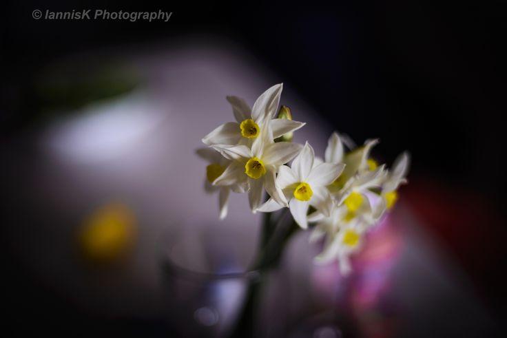 white flowers #2 by Iannis Koukoras on 500px