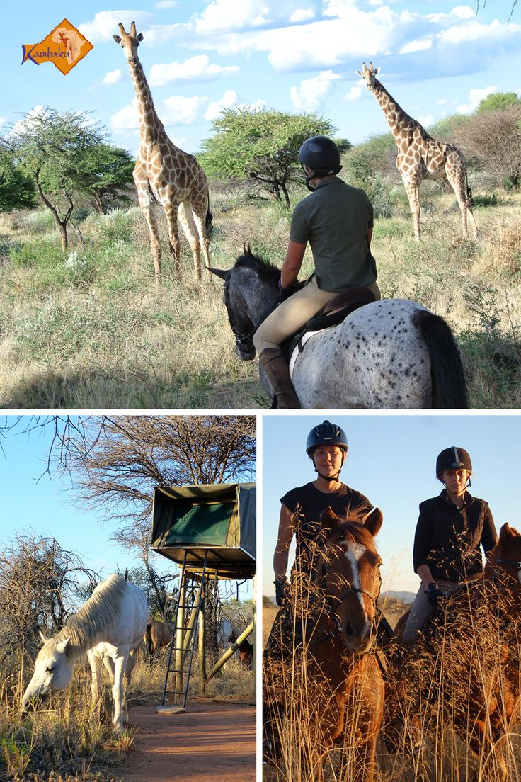 Ever been on a horseback safari in Africa? If not, enjoy Namibia's best holidays on horseback at Kambaku Safari Lodge #horsesafari #safarionhorseback #reitsafaris #horses #kambaku #lodge #namibia #africa #afrika #safari #bestlodge #adventure #savanna #holiday #rider