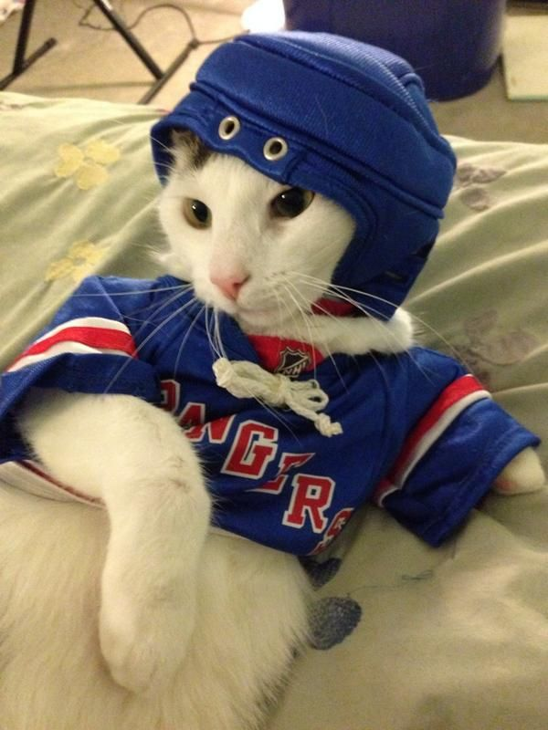 Looks like Cats Zuccarello is ready to hit the ice! Thanks Twitter fan @Kreid_OrDie for the photo. #HockeyPets
