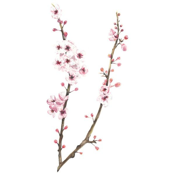 Image of [PRINT] Prunus serrulata