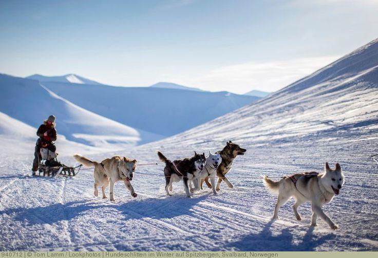 Hundeschlitten im Winter auf Spitzbergen, Svalbard, Norwegen