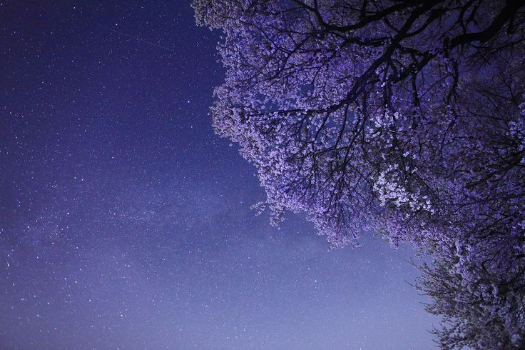 Cherry blossoms and Summer Triangle by Noriko Tabuchi on 500px