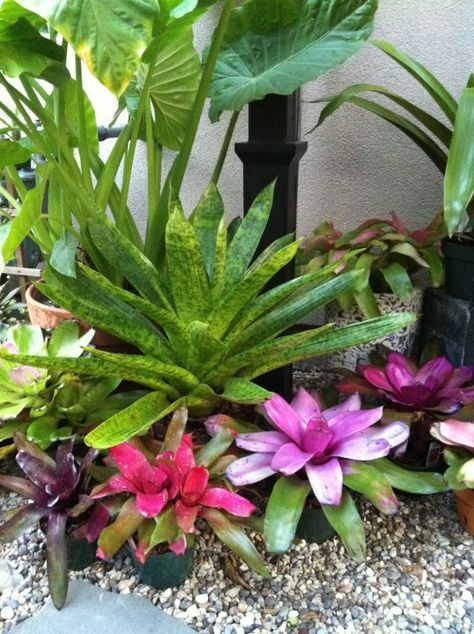 4416 mejores imágenes de tropical design en pinterest | jardines