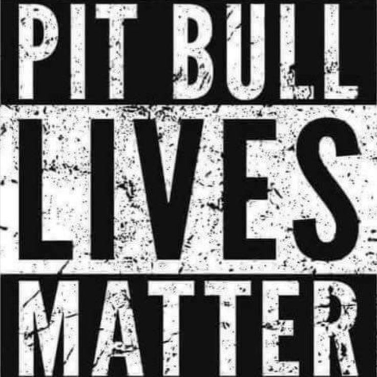 1/13/17 ONCE AGAIN NYC ACC MURDERED PIT BULLS!! 4 WONDERFUL FRIENDS WAS COLDBLOODED MURDERED TODAY!! WE ALL KNOW NYC ACC'S DIRECTOR RISA WEINSTOCK HATES PITBULLS AND OBVIOUSLY TRIES HER BEST TO EXTERMINATE ALL OF THESE WONDERFUL DOGS!! HASN'T THE TIME COME TO GET RID OF THIS HATEFUL PERSON INSTEAD OF ALL THE WONDERFUL DOGS DOING NO HARM BUT LOVE PEOPLE? /IJ http://nycdogs.urgentpodr.org/category/gone-by-month/gone-dogs-jan-2017/