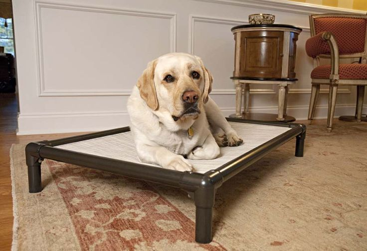 Kuranda indestructible dog bed