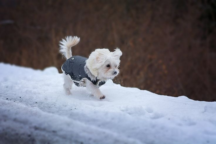 Why buy clothes for your dog. Lulu & Robbie Blog