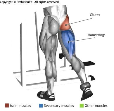 GLUTES -  ONE LEGGED CABLE KICKBACK