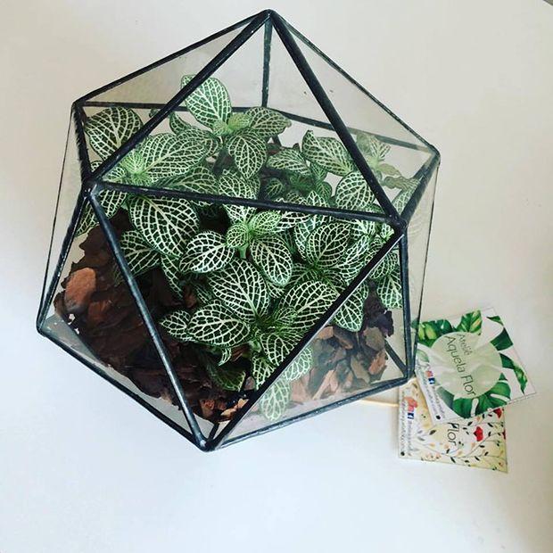 Plant Sitter: brasileira cria serviço profissional de 'babá de plantas' para quem viaja - Follow the Colours