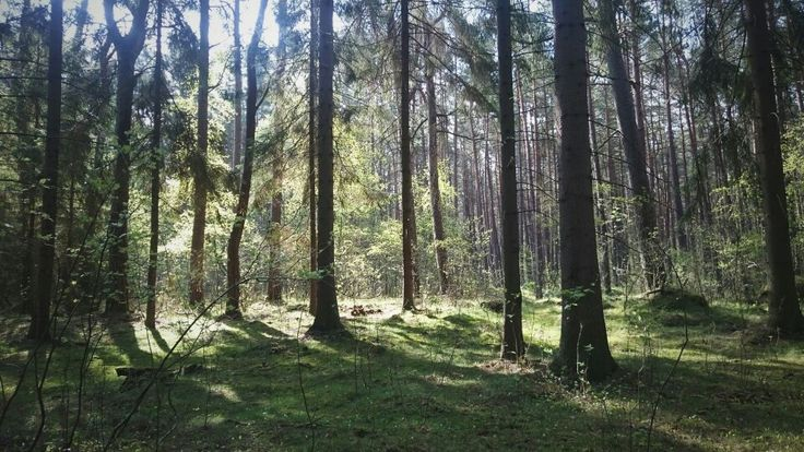 #forest