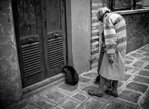 An old woman feeding a homeless cat in Palermo. Sicily gives a shelter for many people and homeless animals that fight for survival together everyday