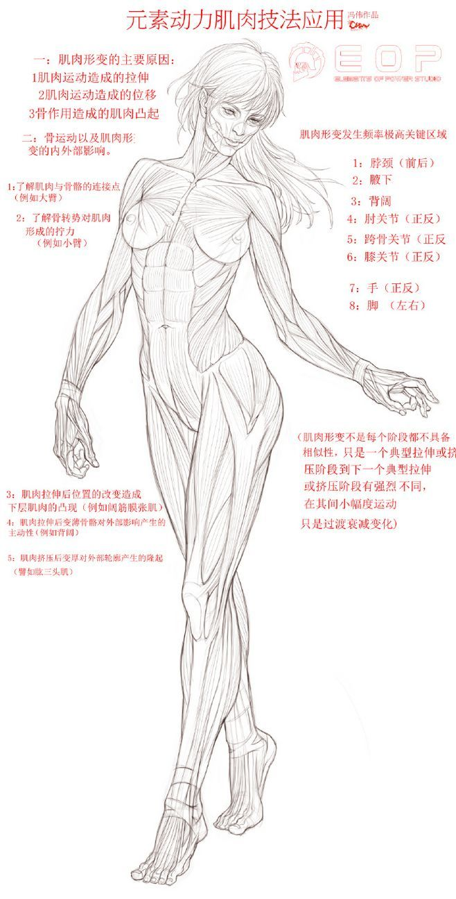 181 Best Drawing Reference Anatomy Female Images On Pinterest