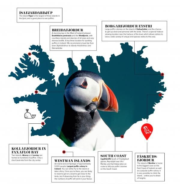 Spotting puffins: here is our map showing the best places around Iceland | Icelandmag
