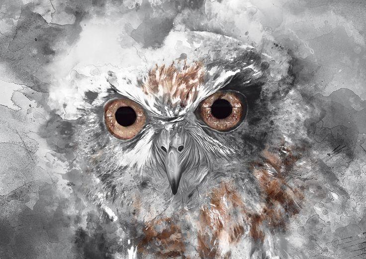 #beauty #animal #animals #bird #birds #owl #owls www.hogstudio.com.pl
