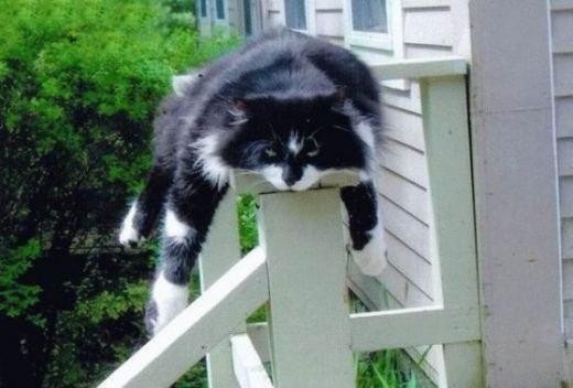 (^^)Planks, Lazy Day, Funny Cat, Cat Sleep, Pets, Fat Cat, Cat Naps, Kitty, Funny Animal Humor