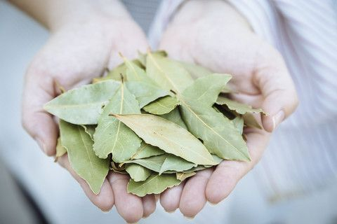Daphnis and Chloe Balsamic Bay Leaves - available at www.homerst.com.au