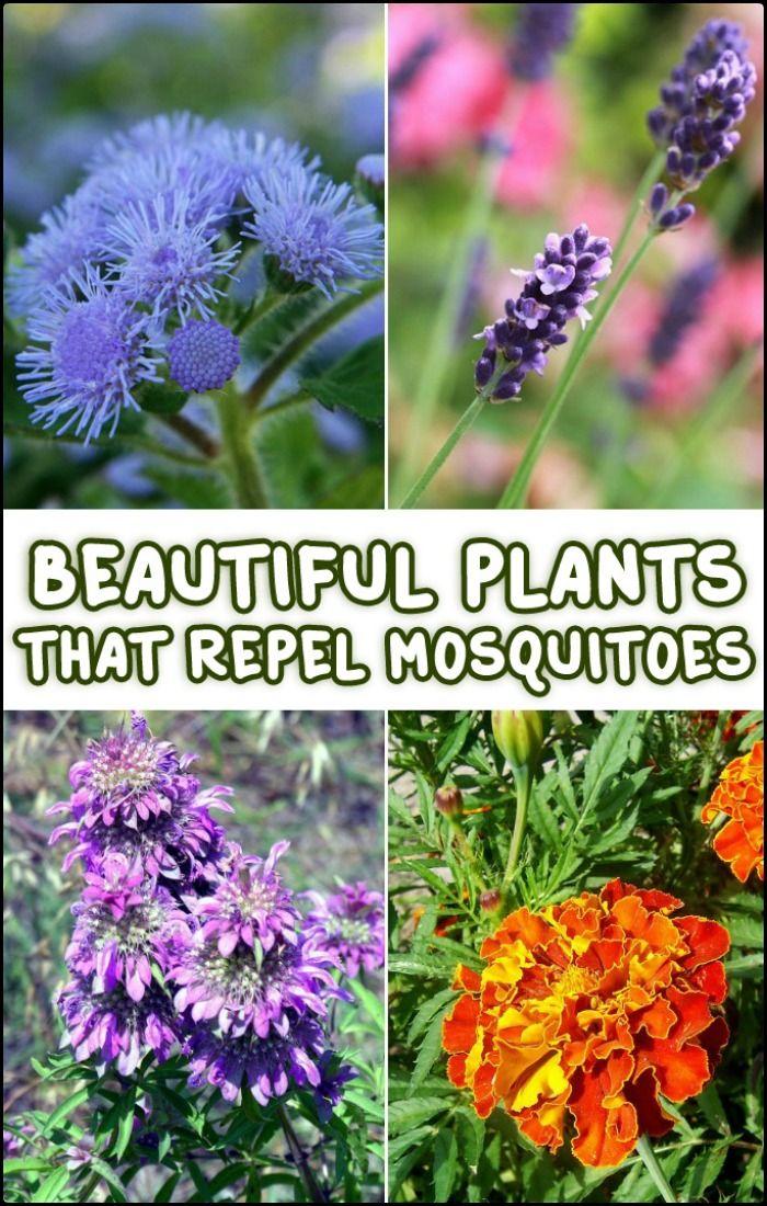 77 best images about garden decor on pinterest gardens planters and backyards. Black Bedroom Furniture Sets. Home Design Ideas