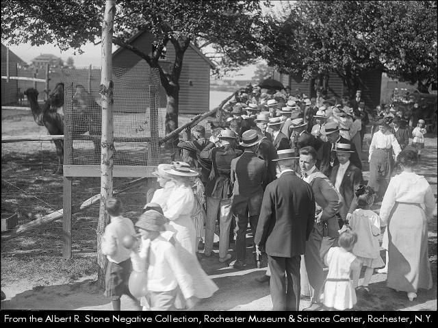 crowd is gathered outside the compound where a baby camel is on view. Animal shelters are visible in the background. This day marks the formal opening of Durand Eastman park.  Animal zoo--New York (State)--Rochester.
