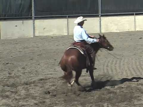 Horse Training Tips with Larry Trocha