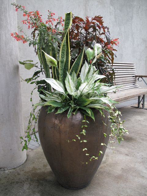 San Antonio Botanical Gardens      Great Gardens  U0026 Ideas