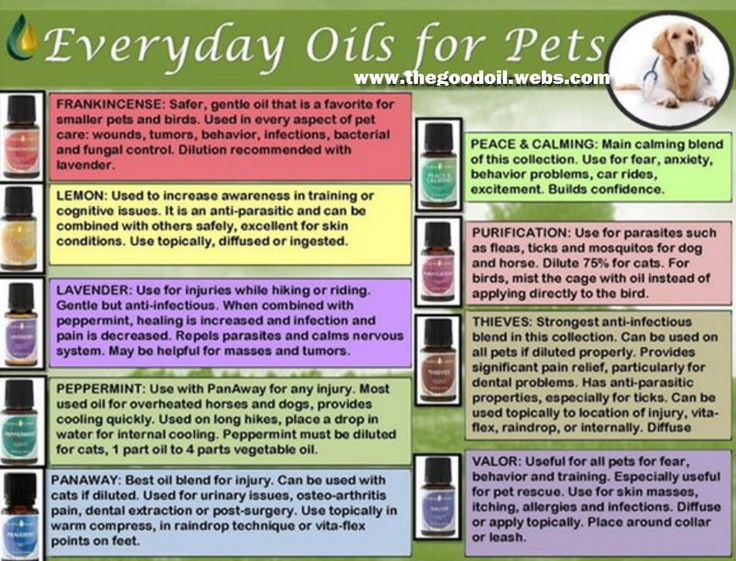 1000 Images About Essential Oils For Pets On Pinterest