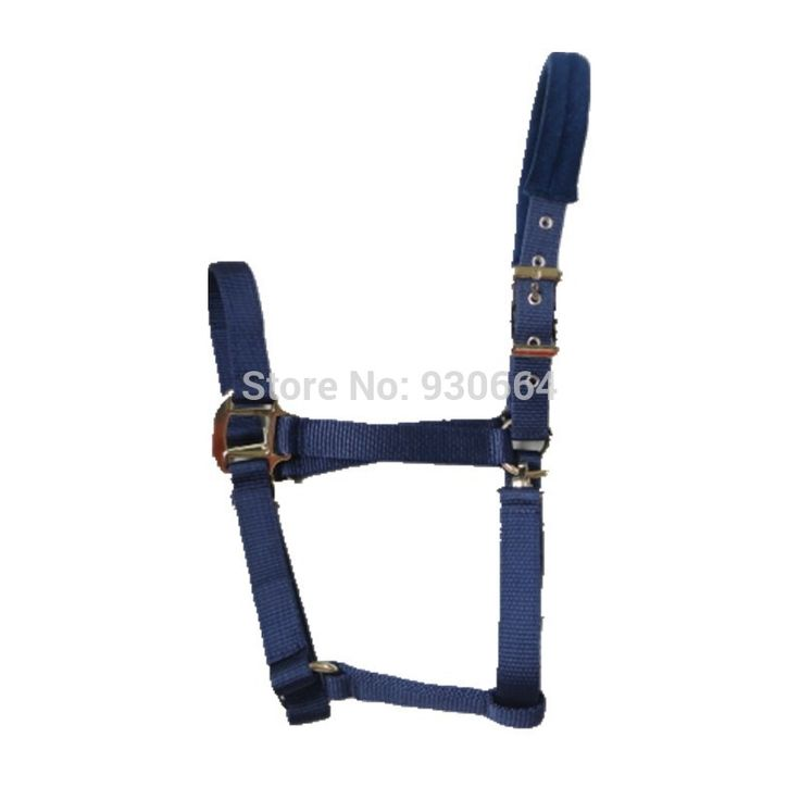 Quality PP Webbing Horse Tack Colorfull Padded Horse Halters
