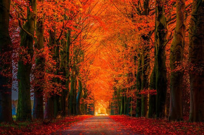 tree covered road in fall artwork canvas - Google Search