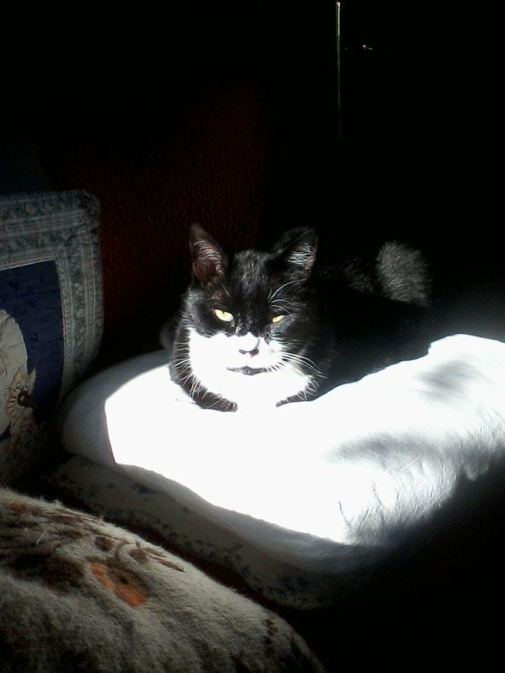 lui è Rocco, 13 anni di età!