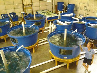 564 best aquaponics hydroponics images on pinterest for Aquaponics fish food