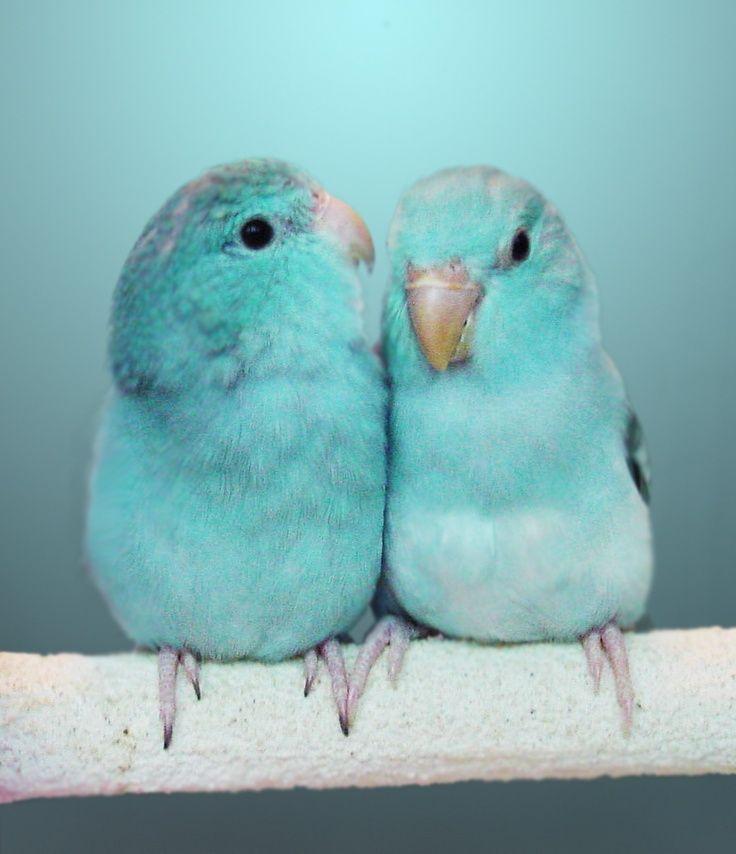 Colors ~ Aqua Blue